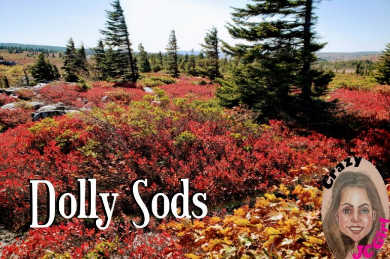 Dolly Sods Wilderness, WV - crazyJCgirl.com