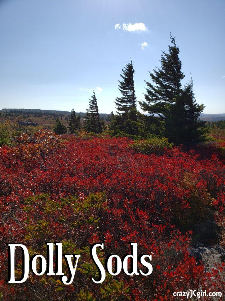 Dolly Sods, WV - crazyJCgirl.com